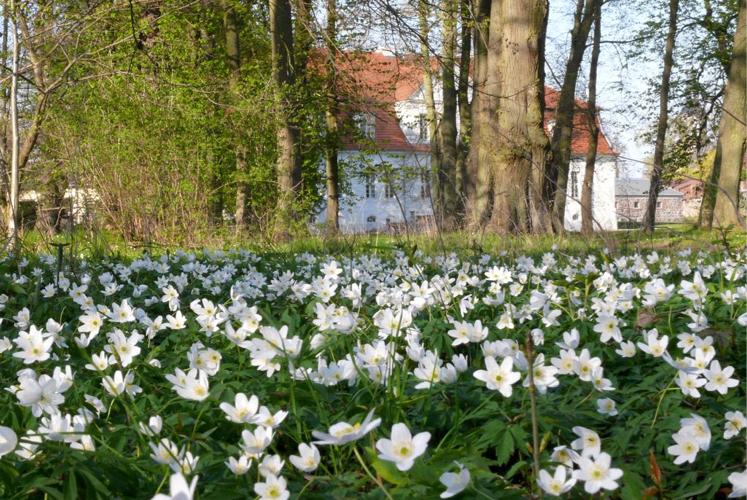 Blumenbeet Schloss Kotelow
