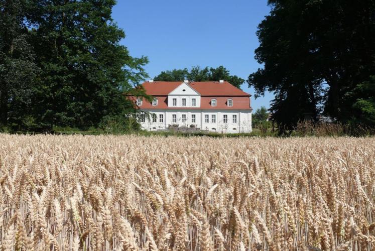 Feld vor Schloss Kotelow