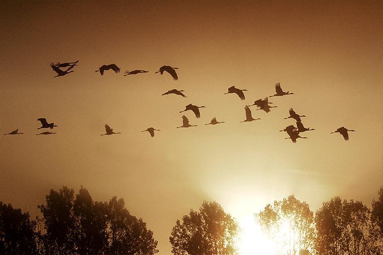 Vögel im Sonnenuntergang